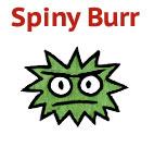 Spiny Burr